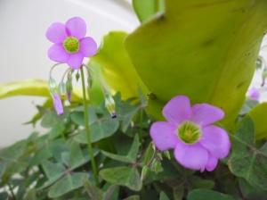wild flower pot